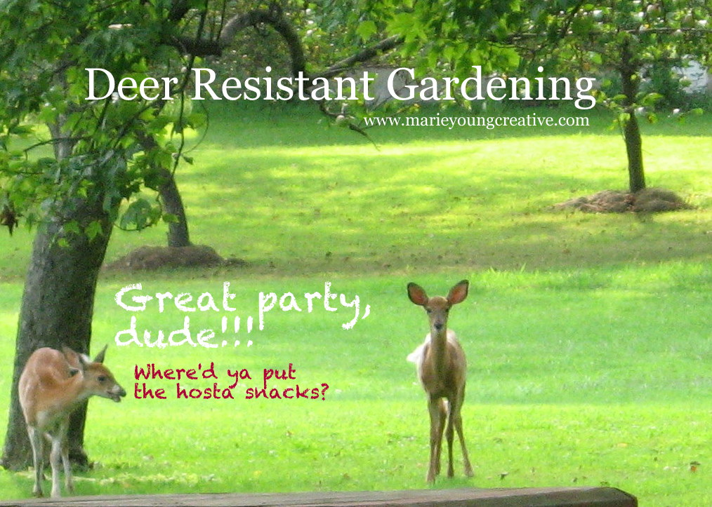 hosta party deer resistant garden