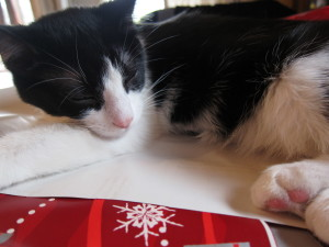 Cat sleeping on wrapping paper