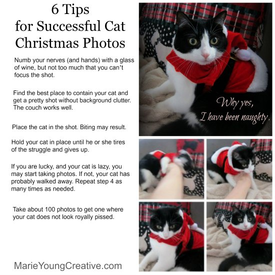 6 tips to successful Christmas cat pictures